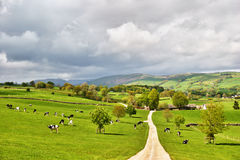 Picturesque English dairy farm Royalty Free Stock Image