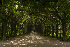 The picturesque entrance into arched hallway (garden pergola) of climbing plants. The Village Of Arkhangelsk. Russia. Royalty Free Stock Photography