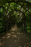 The picturesque entrance into arched hallway (garden pergola) of climbing plants. The Village Of Arkhangelsk. Russia. Stock Photos