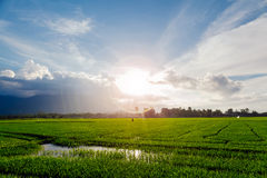 Picturesque field with sunflare Stock Photography