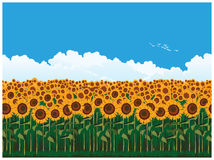 Picturesque field of sunflowers. Seamless horizontal vector illustration of picturesque field of sunflowers Stock Photos
