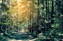 Picturesque footpath in the mysterious forest royalty free stock images