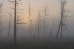Picturesque forest in fog at sunrise Stock Image