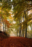 Picturesque forest path. Misty deciduous forest in autumn with picturesque path through the beech trees Stock Photography