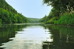 Picturesque forest and the river Stock Images