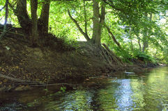 Picturesque forest river with massive trees on the banks of the afternoon in the summer Stock Image