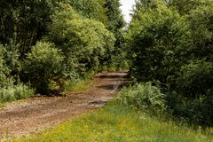 Picturesque forest road stock images