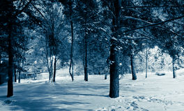 Picturesque forest in Winter Stock Photo