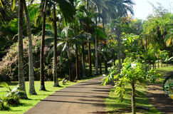 Picturesque garden of Pamplemousse in Mauritius Republic Royalty Free Stock Photo