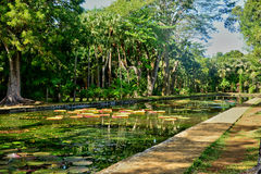 Picturesque garden of Pamplemousse in Mauritius Republic Royalty Free Stock Image