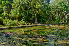 Picturesque garden of Pamplemousse in Mauritius Republic Stock Photography