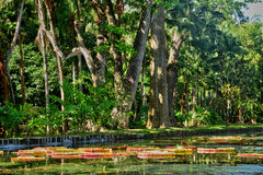 Picturesque garden of Pamplemousse in Mauritius Republic Stock Photos