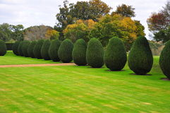 Topiary, Montacute House Gardens (as seen in Wolf Hall) Stock Photos