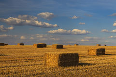 Picturesque golden field with haystacks Royalty Free Stock Photography