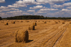 Picturesque golden field with haystacks Royalty Free Stock Image