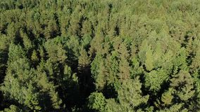 Picturesque green dense forest trees lit by bright sunshine stock video
