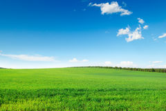 Picturesque green field Royalty Free Stock Photography