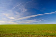 Picturesque green field and blue sky Stock Photo
