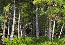 Picturesque green forest Stock Image
