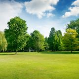 Picturesque green glade in city park. Grass and trees. Royalty Free Stock Photography