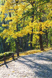 Picturesque group of trees in alley of city park Stock Images