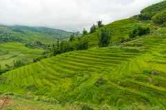 Picturesque hills with layers of green rice terraces. Nature background Stock Photo
