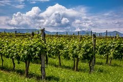 Prosecco region, view of hills with vineyards, sunny day. Picturesque hills with vineyards of the Prosecco sparkling wine region in Valdobbiadene - Italy stock photography