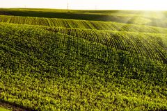 Picturesque hilly field. Agricultural field in Israel stock photo