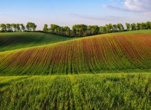 Picturesque hilly field stock photo