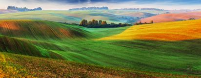 Picturesque hilly field. Green wavy field royalty free stock photos