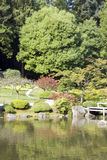 Picturesque Japanese garden. Beautiful plants and reflection of Seattle Japanese garden in summer time Royalty Free Stock Images