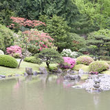 Picturesque Japanese Garden. Beautiful flowers and plants in Seattle Japanese garden in spring time Royalty Free Stock Photos