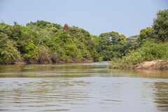 Picturesque Jungle River and Riverbanks Stock Photo