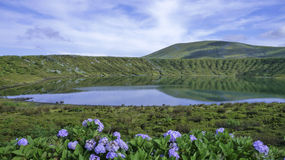 Picturesque lagoon and flowers Royalty Free Stock Images