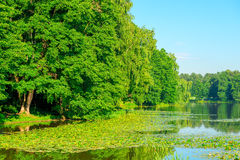 Picturesque lake with water lilies Stock Image