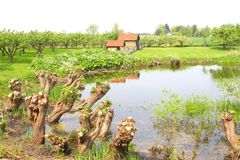Picturesque landscape in the Betuwe in spring,Netherlands Royalty Free Stock Photo