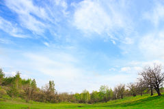 Picturesque landscape with green grass and cirrus clouds Royalty Free Stock Images