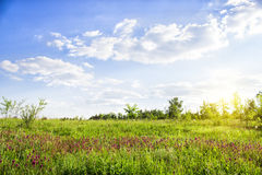 Picturesque landscape with green grass and cirrus clouds in summer sunny day. Stock Image