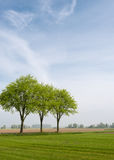Picturesque landscape int spring season. Lawn agricultural landscape in the Netherlands with three trees with young leaves against a blue sky in springtime Stock Photo
