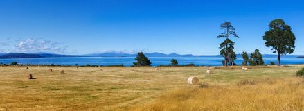 Picturesque landscape, lake Taupo panorama royalty free stock photo