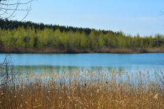 Picturesque landscape. Lake with thickets of bulrush on shore and forest on horizon. Spring scenery stock photo