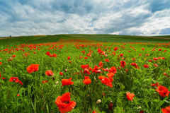 The picturesque landscape with poppy flowers against the blue cloudy sky Stock Photography