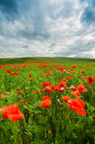 The picturesque landscape with poppy flowers against the blue cloudy sky Royalty Free Stock Photos