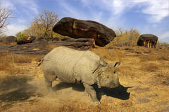 Picturesque landscape with rhinoceros Stock Photos