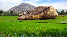 Picturesque landscape with rice plantation. Hampi, Royalty Free Stock Photos
