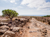 Picturesque landscape of Tenerife Stock Photography