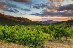 The picturesque landscape with vineyards Royalty Free Stock Photos