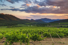 The picturesque landscape with vineyards Stock Images