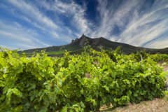 Picturesque landscape with vineyards Royalty Free Stock Photography