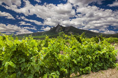 Picturesque landscape with vineyards Stock Image